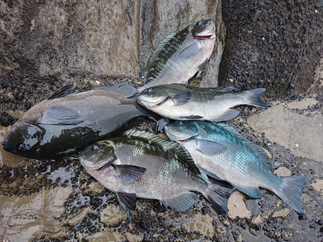 伊豆半島釣行