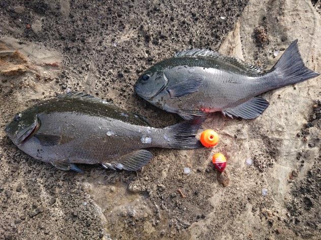 三浦半島釣行