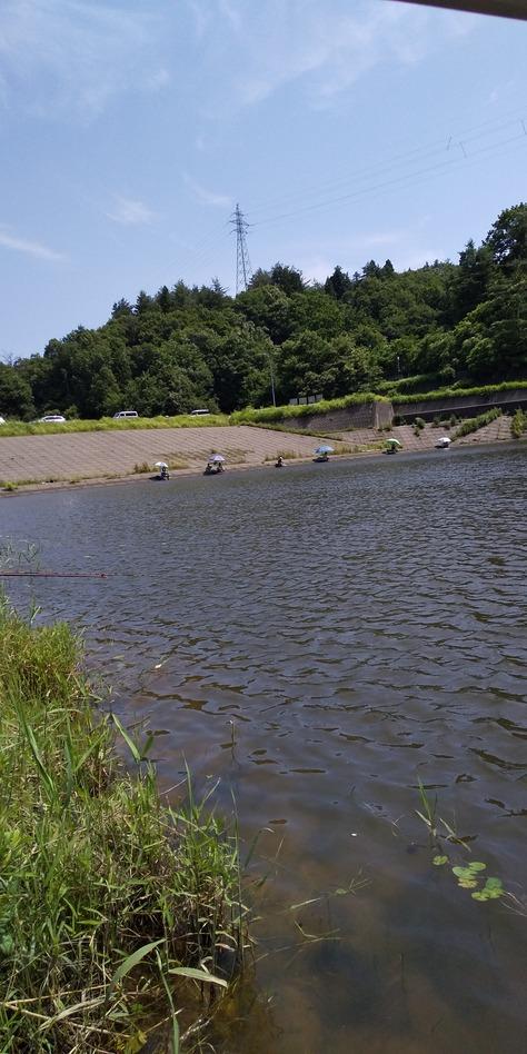 初夏の野釣り