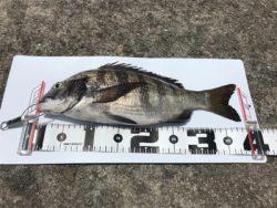 39.5cm 1枚