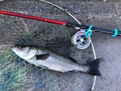 【ヘチ釣り】三重県霞埠頭にて良型チヌ2尾