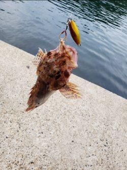 簡単に色んな魚が釣れる!【サンライン×ジャングルジム インプレッション】