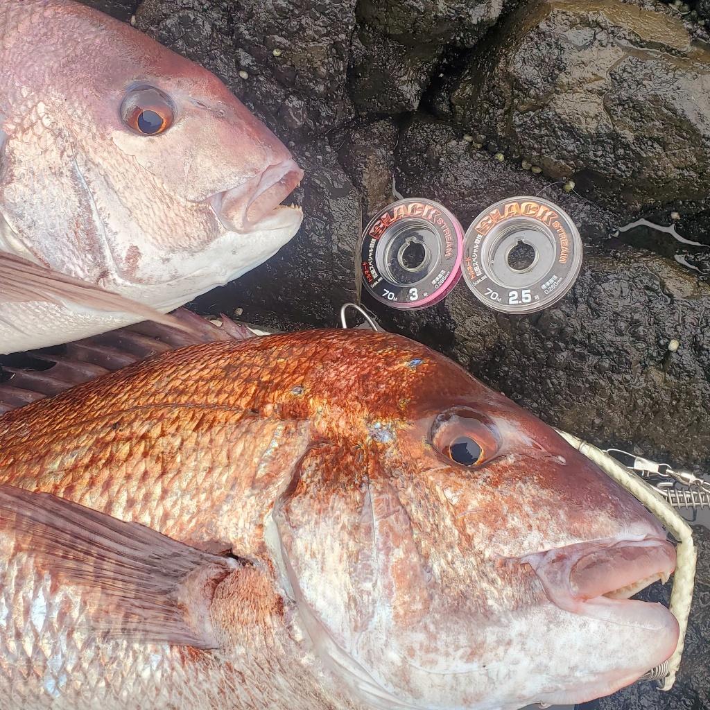 山形県飛島の真鯛