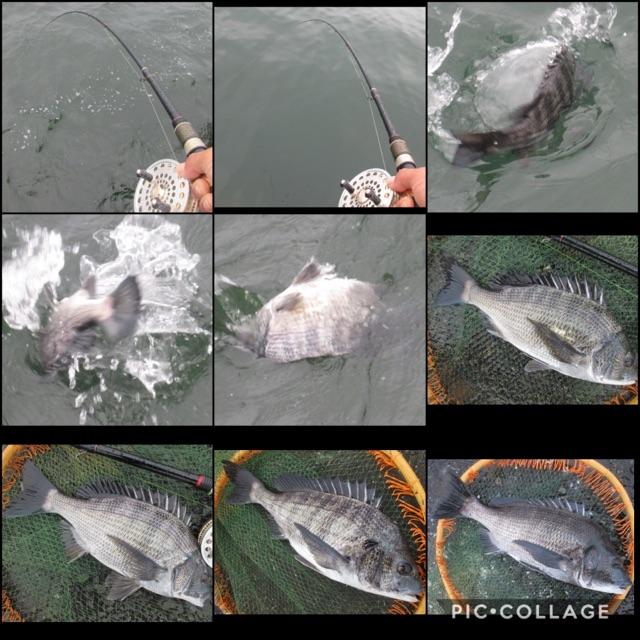 シビアな釣り。