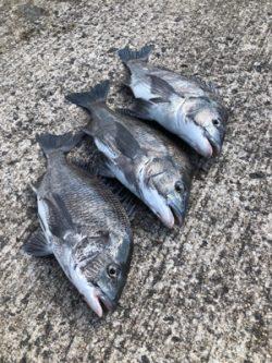 寒チヌ釣り