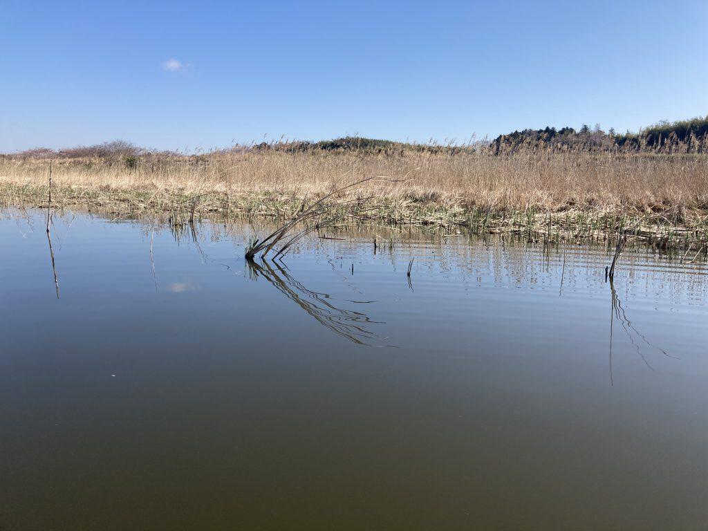 春の沼バス