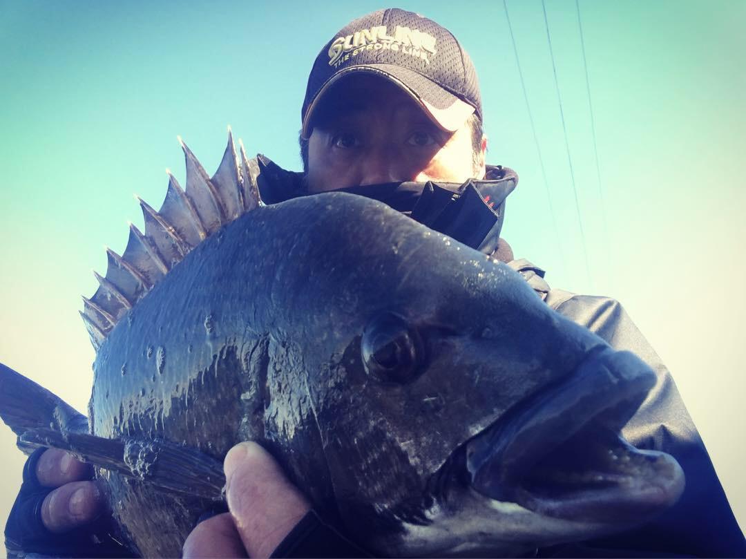 ヨタ波の下の魚