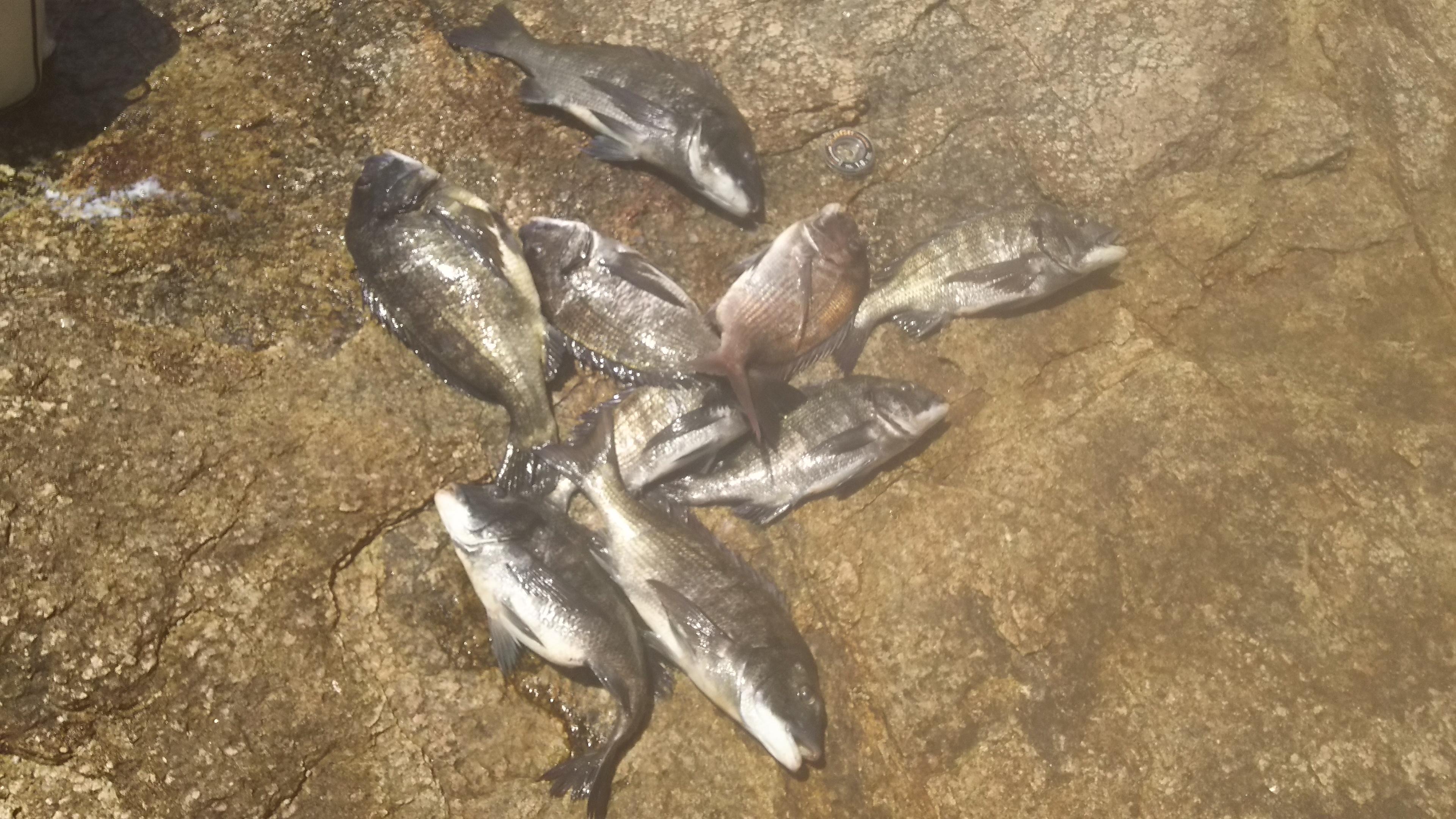 名釣会第17回磯釣り大会