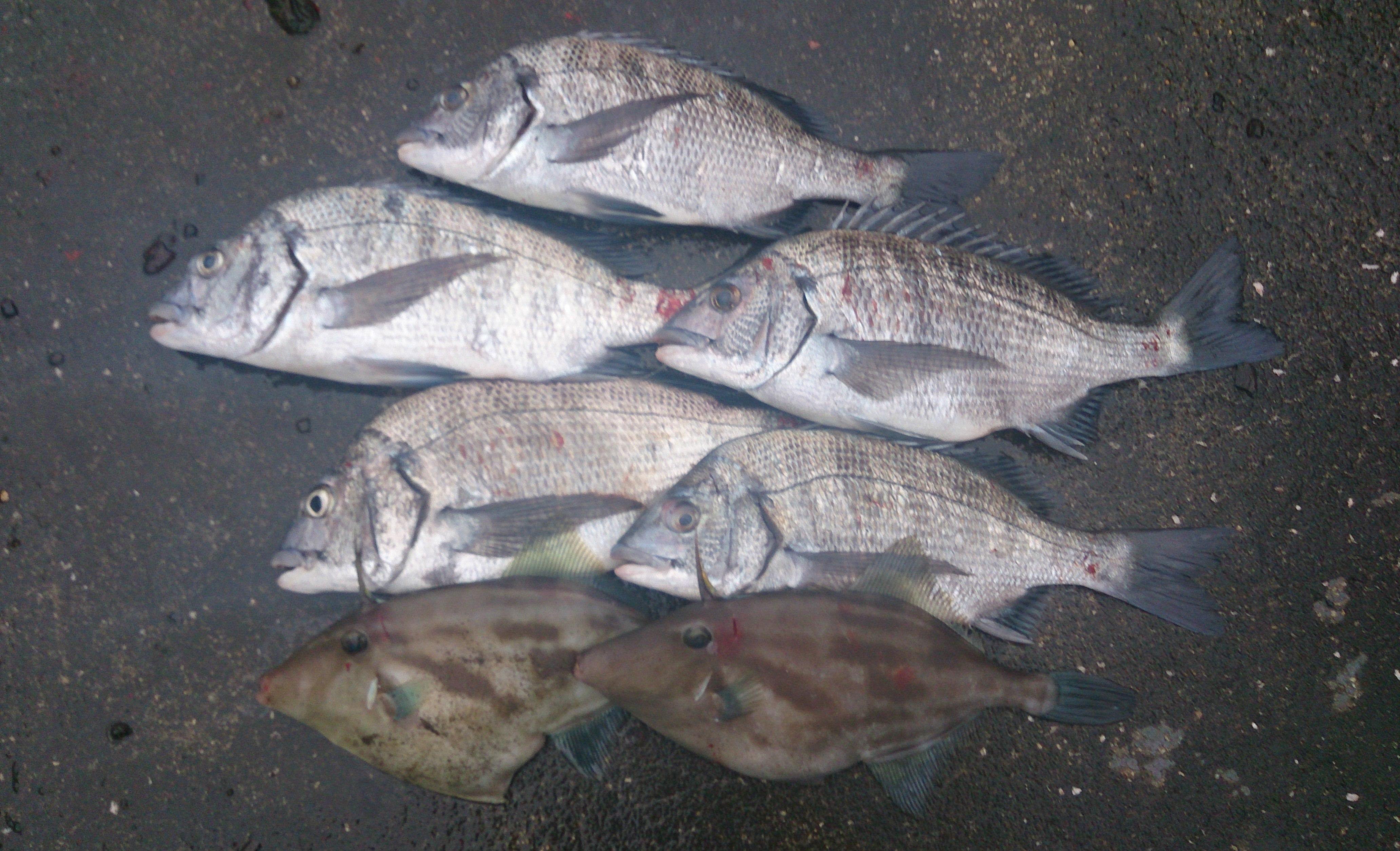 最後の釣行。最初のライン。
