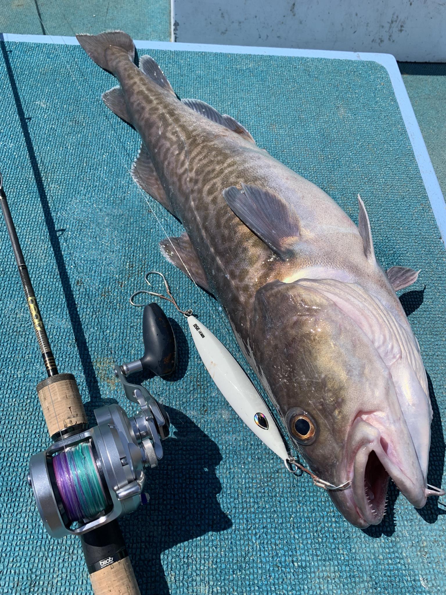 中深海の鱈ジギング