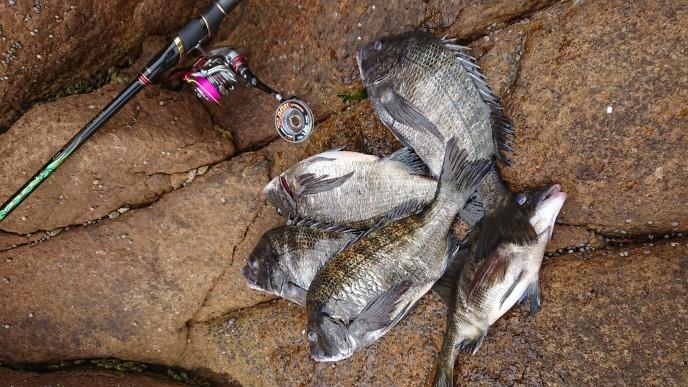 サンラインスタッフ釣行レポート