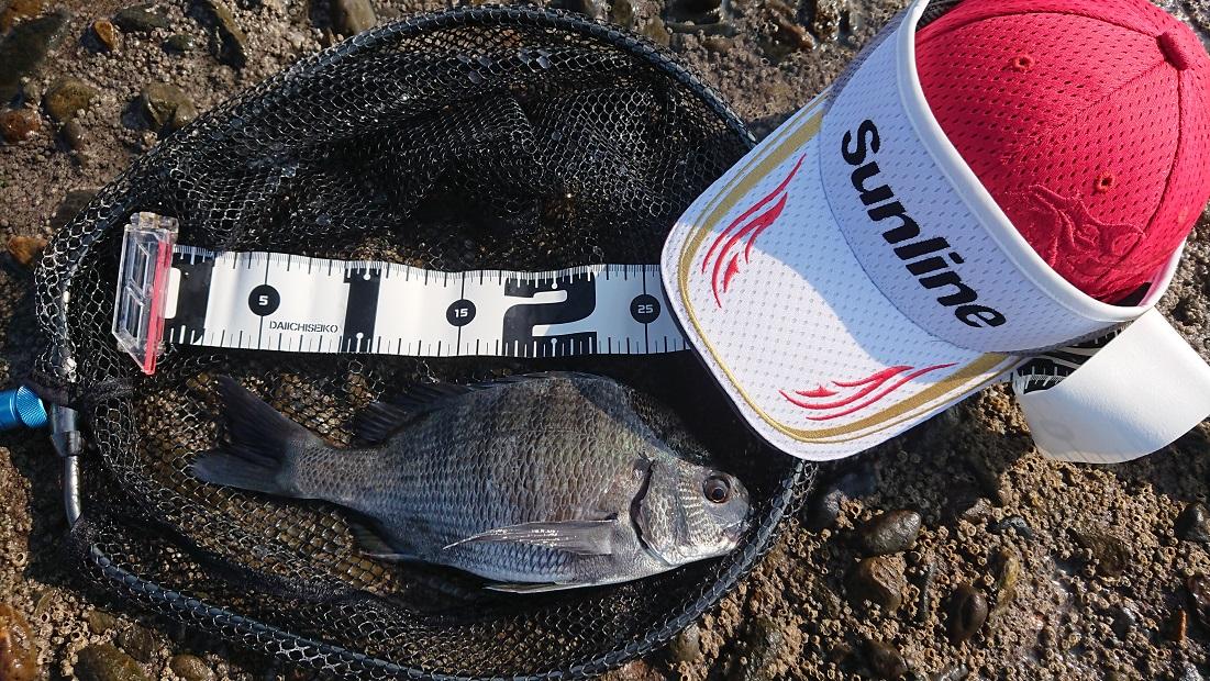 野島防波堤釣行 型は選べません。