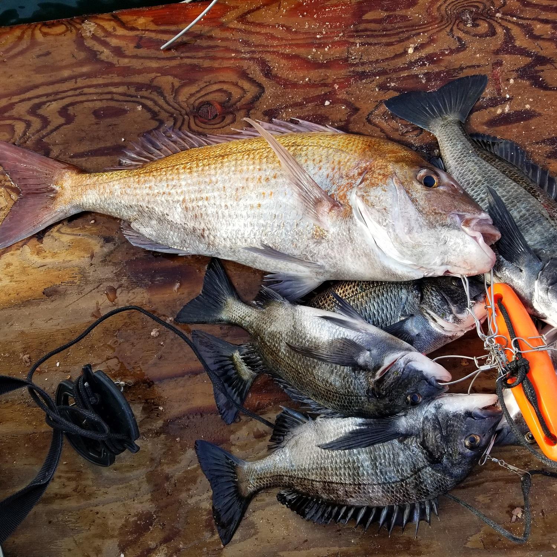 姜チヌ釣行