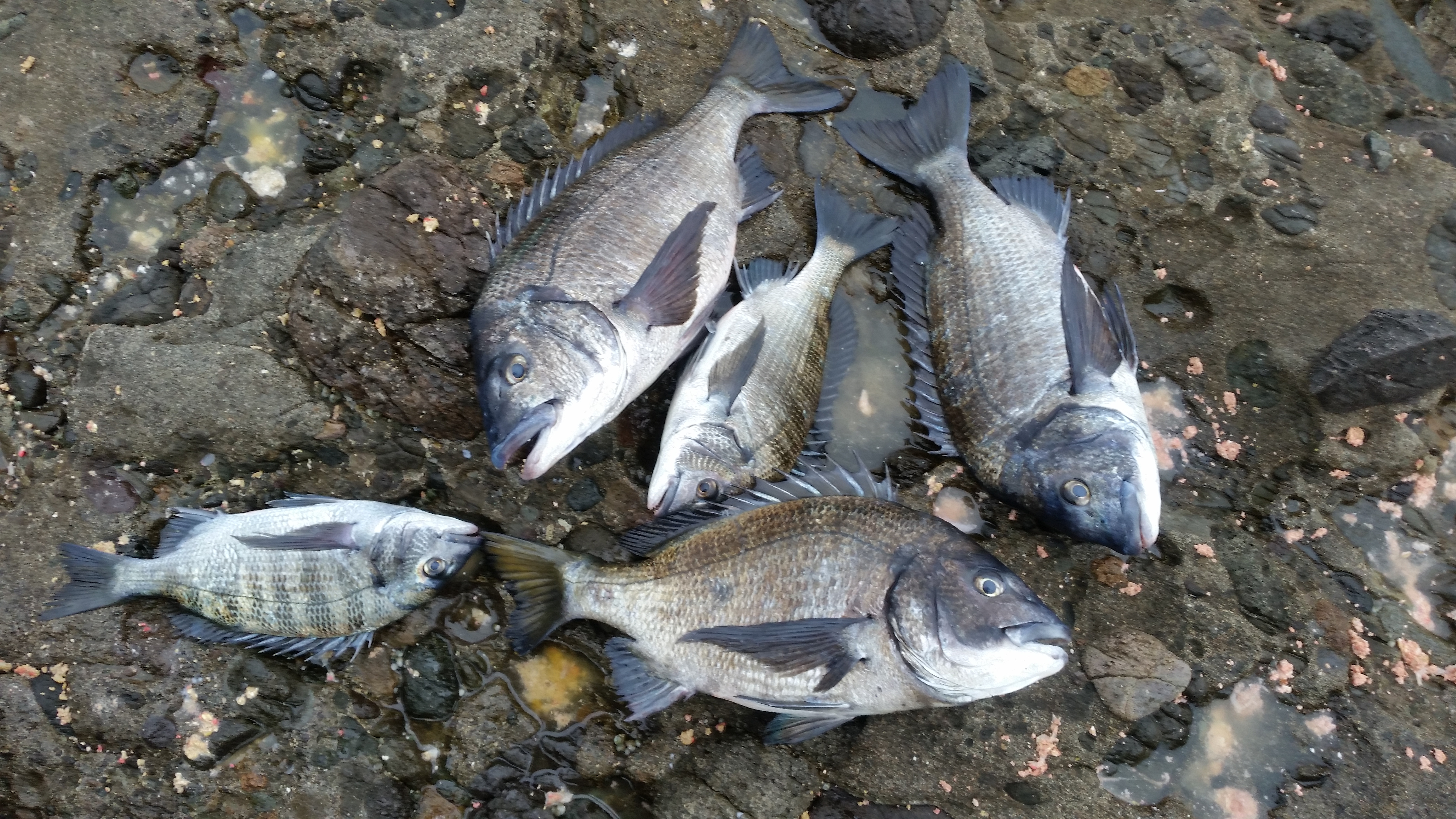平成最後の釣行は…。