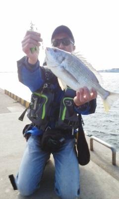 色々餌使用、使い方会得!キビレながら初釣りから今年4回坊主無し(40cm以上)