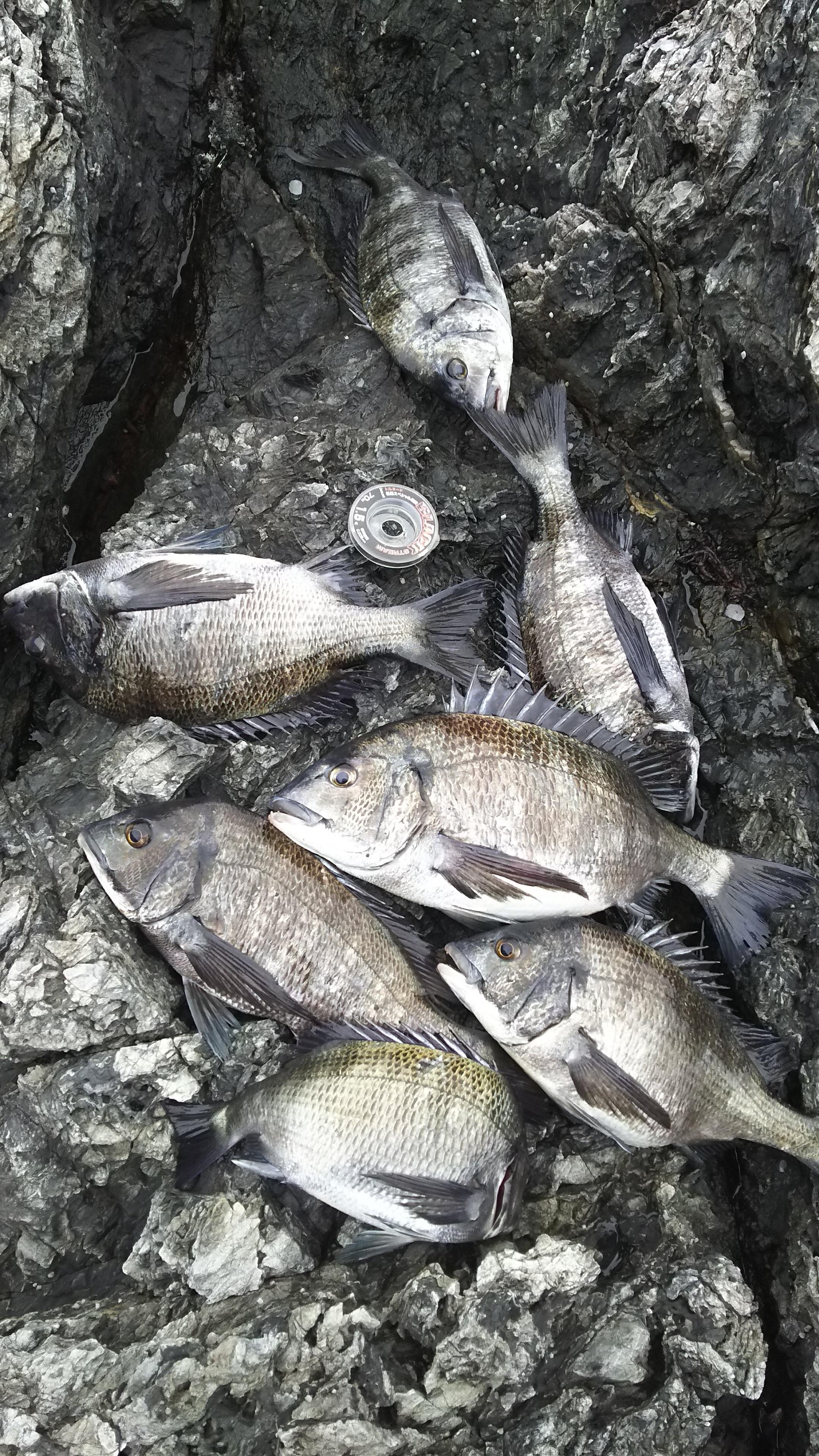 GFG山口支部チヌ釣り大会参加