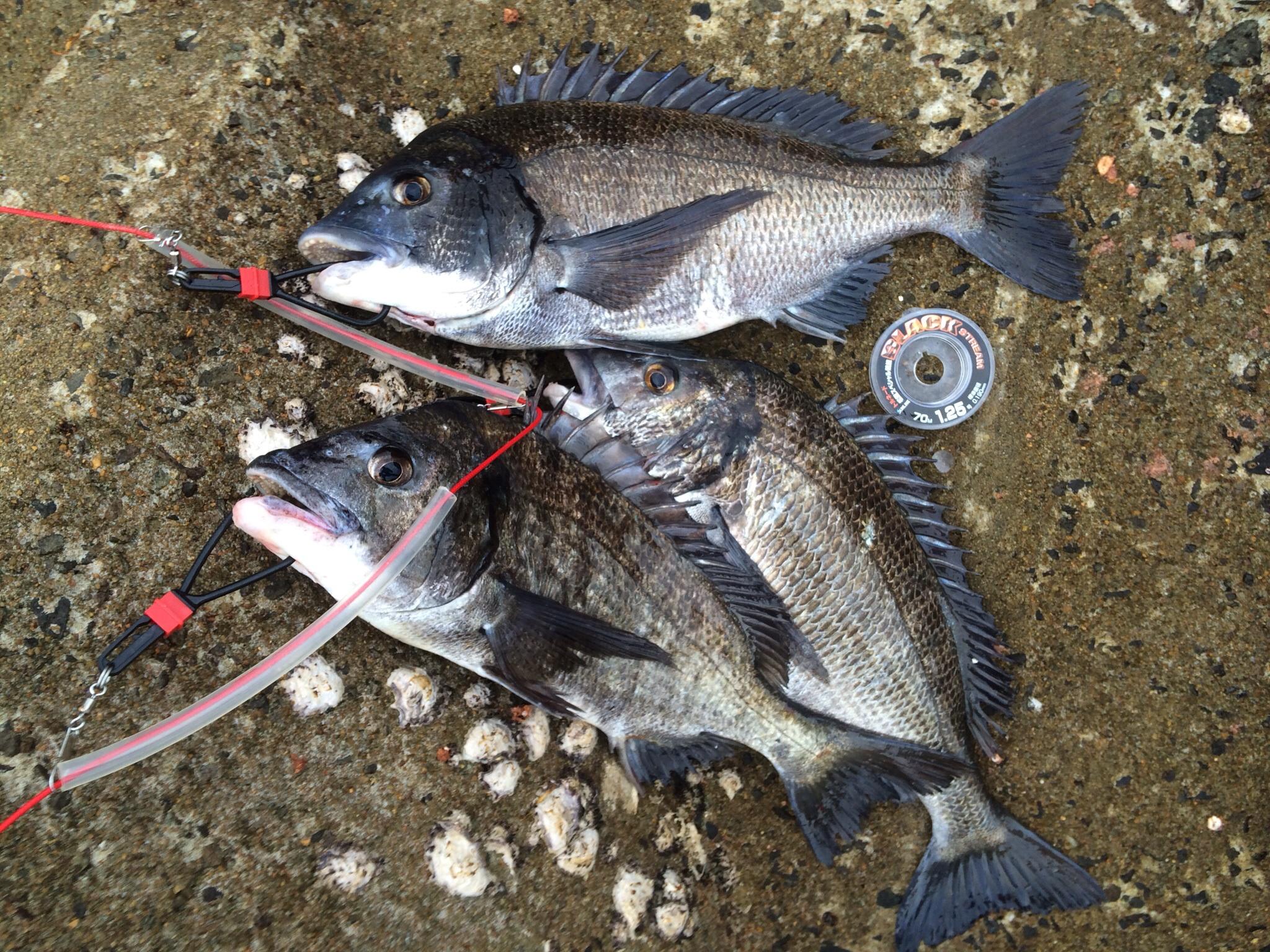 夏場のチヌ釣り