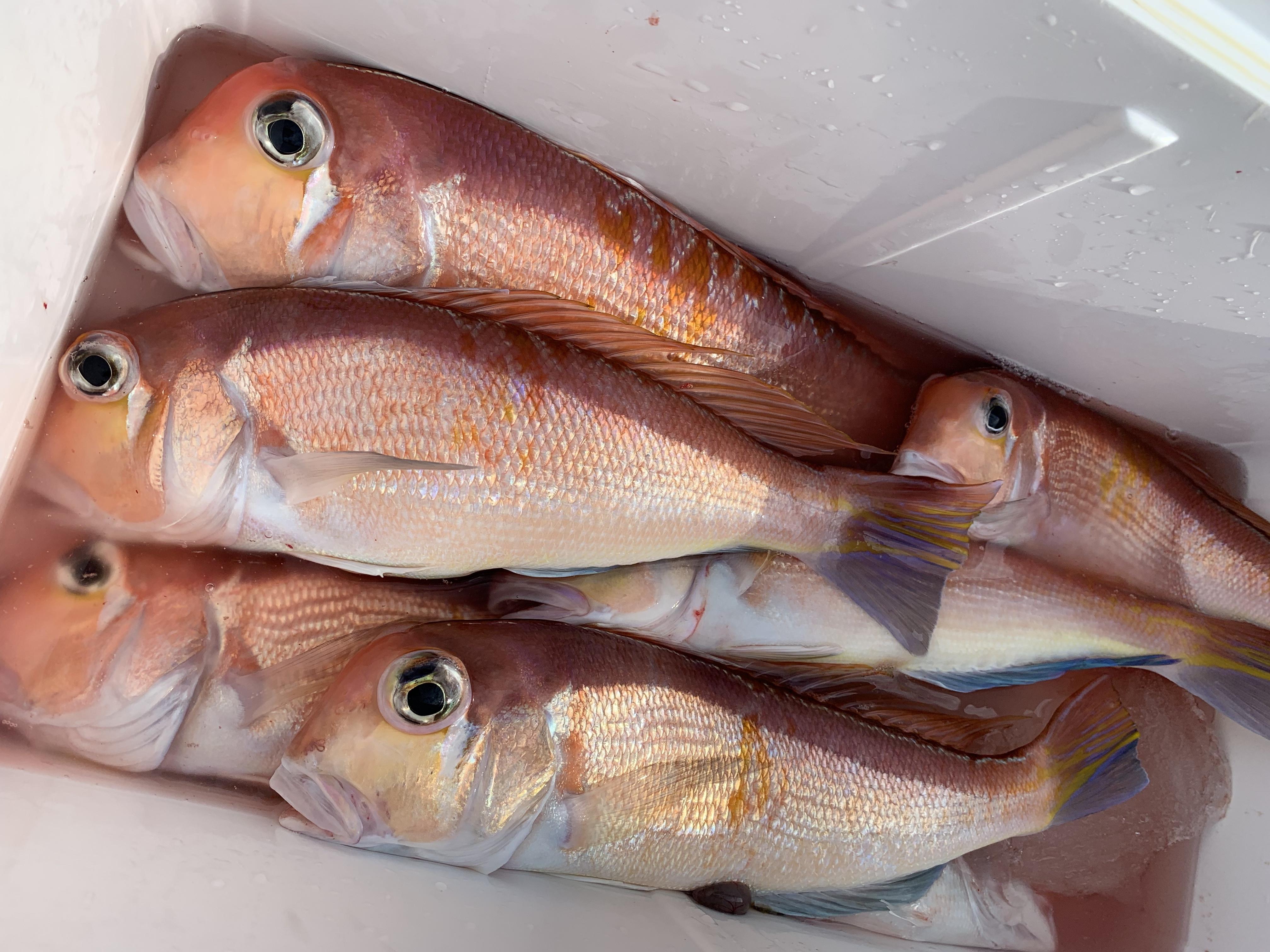 若狭湾の高級魚を求めて
