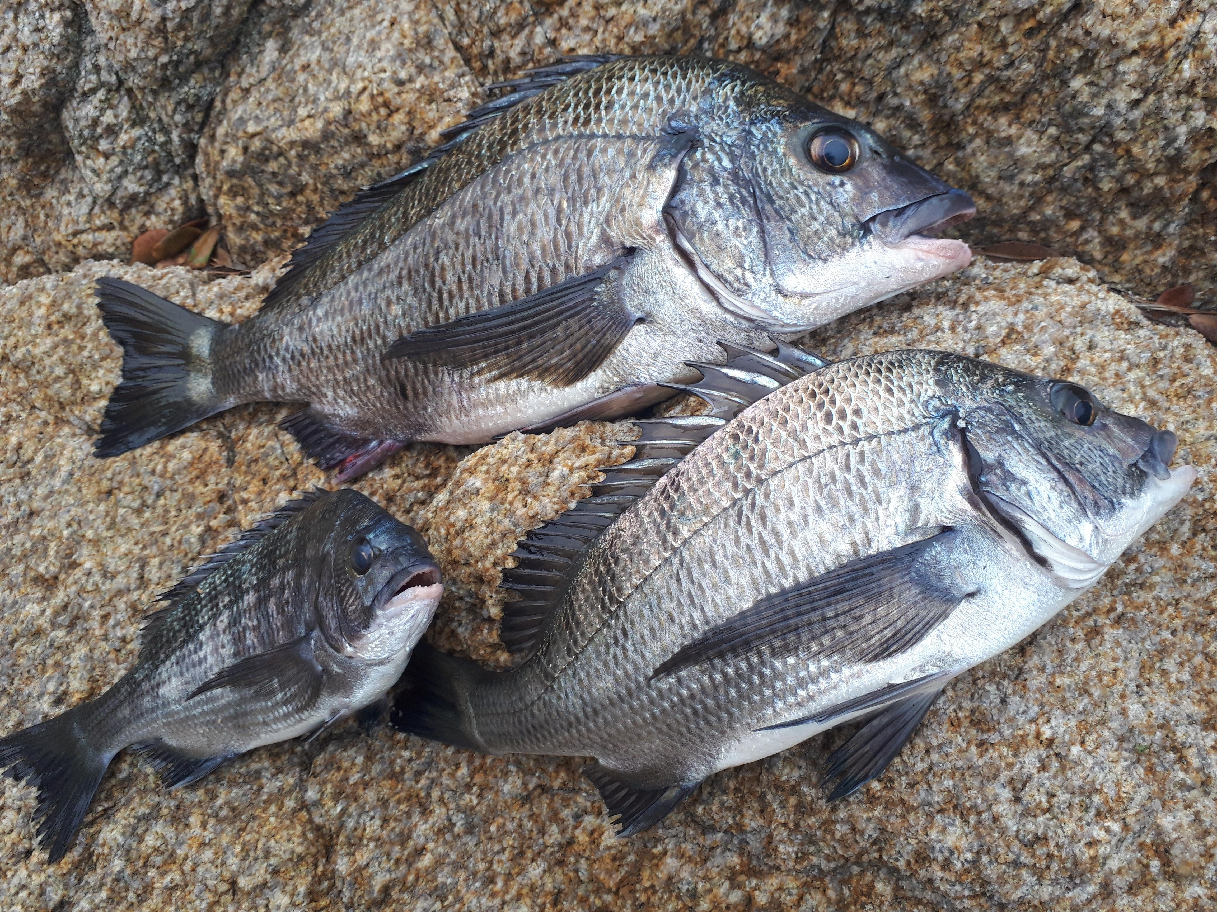 名釣会中国地区本部磯釣り大会