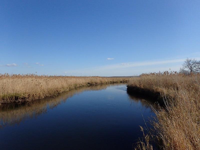 初冬の湿原アメマス