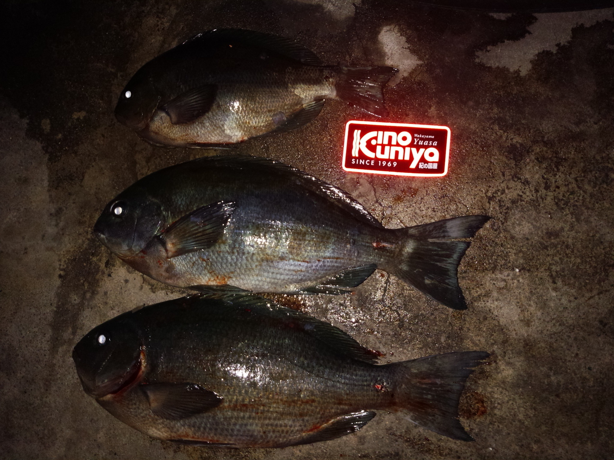 和歌山県中紀の波止テトラでフカセ釣り
