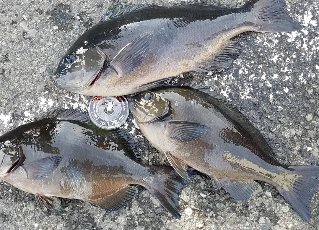 新年初釣り
