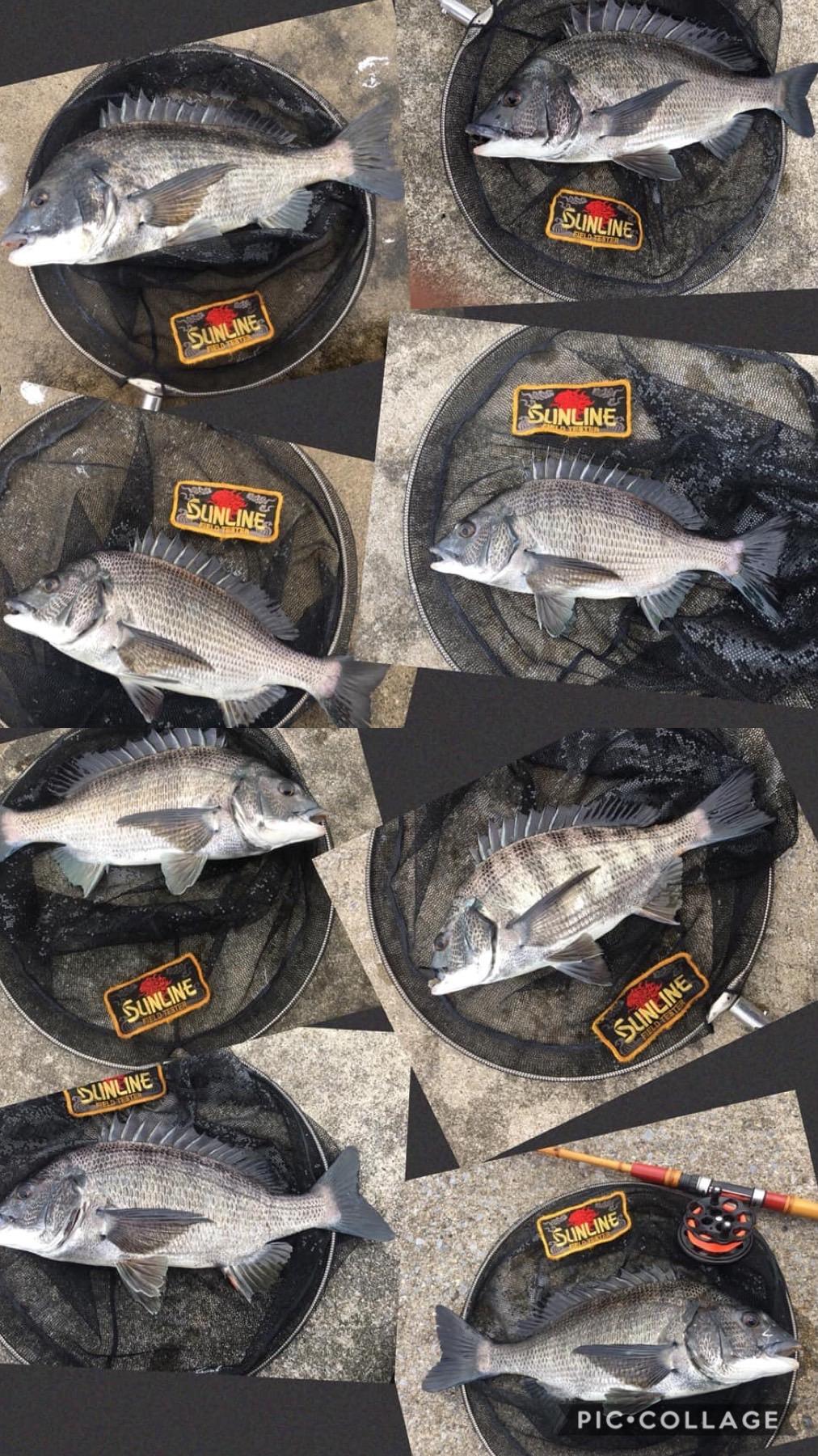 野武士#1で五井の魚に挑む